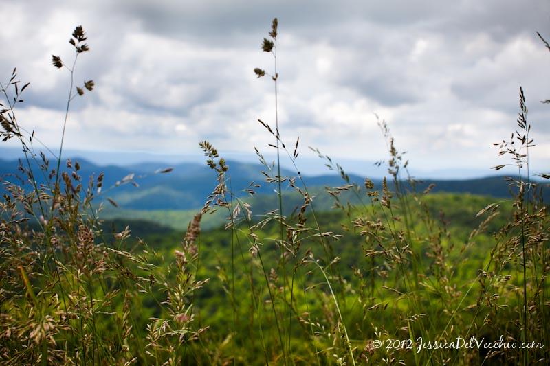 Skyline Drive Shenandoah National Park Jessica Del Vecchio