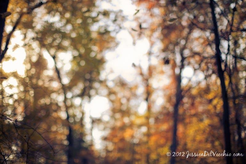 National Arboretum In Fall Jessica Del Vecchio Photography