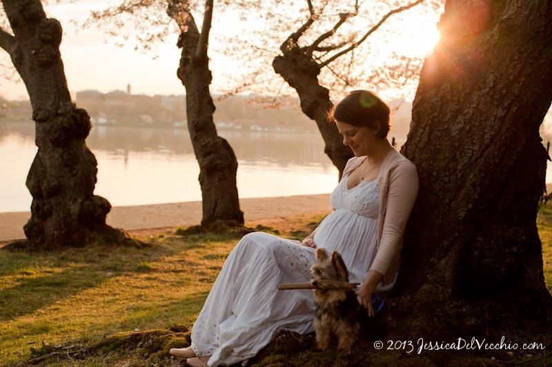Washington DC Cherry Blossom Maternity