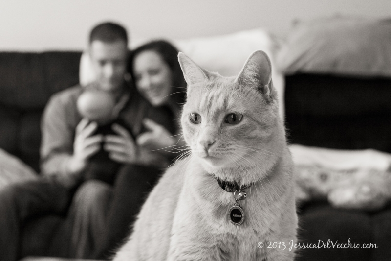 capitol hill pet photographer